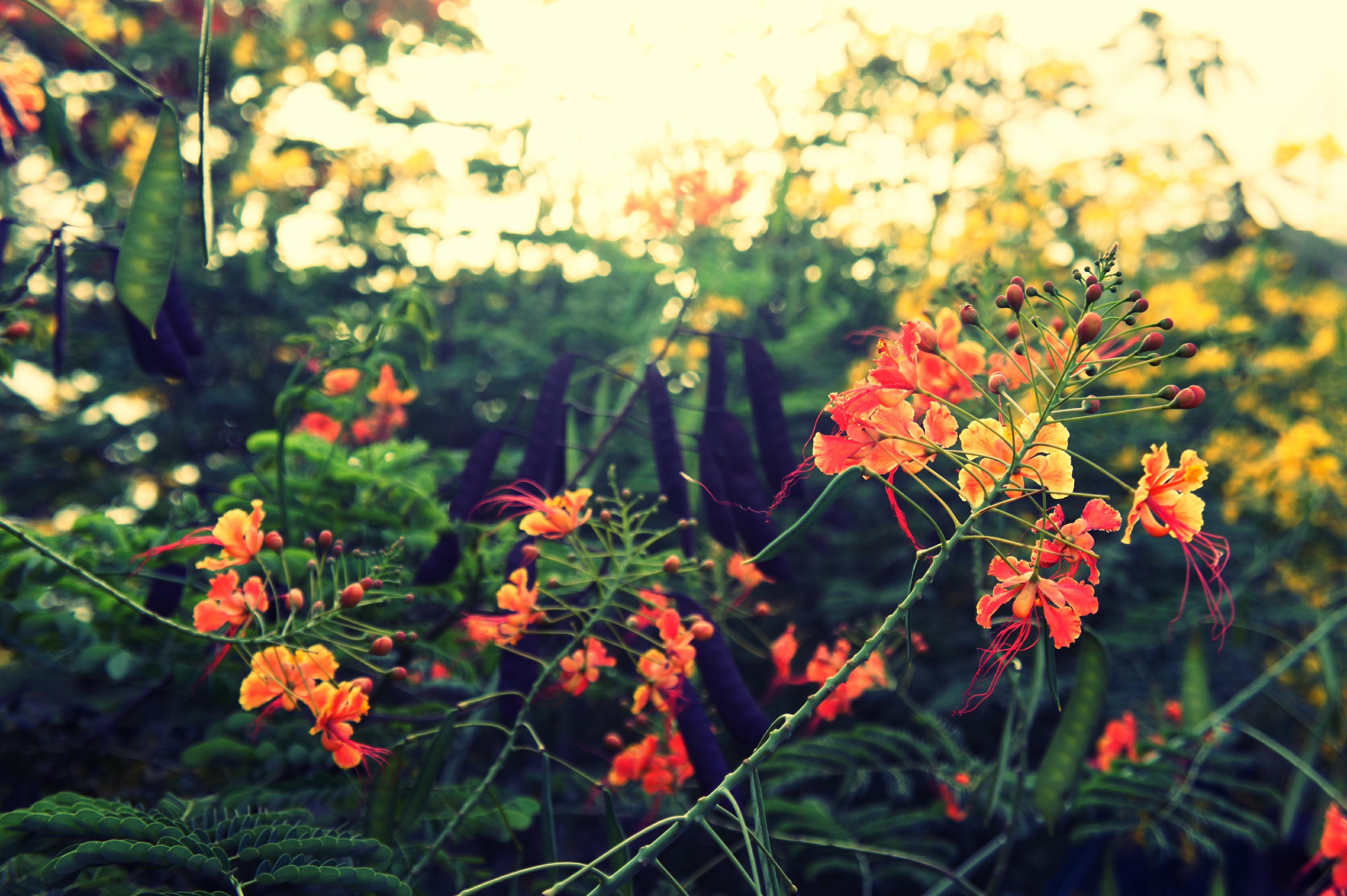 fleur rouge1