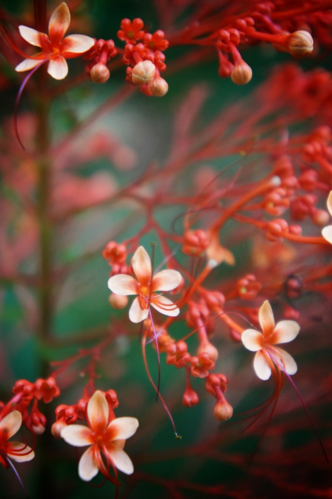 Gros plan fleur rouge