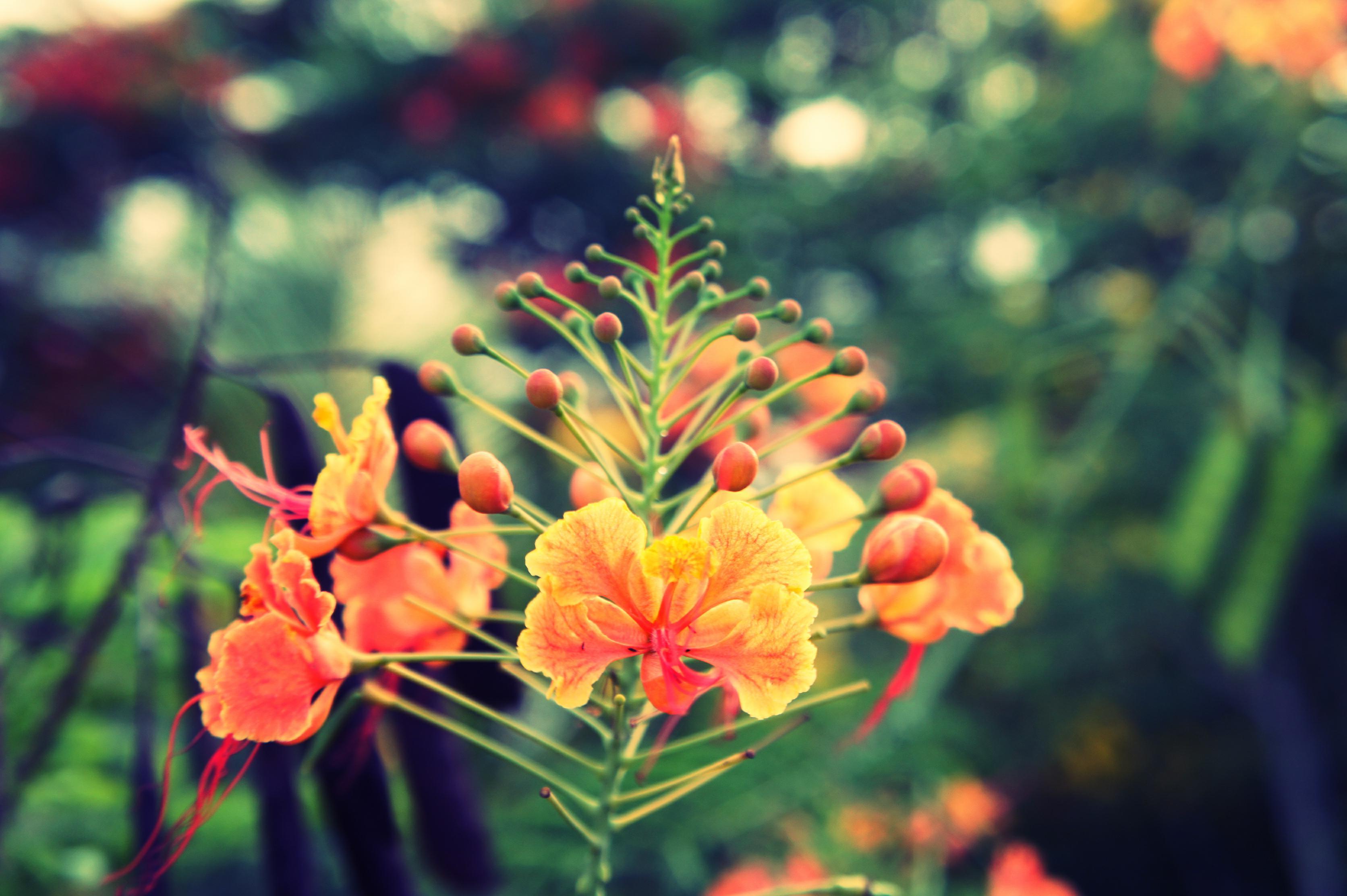 fleur rouge2