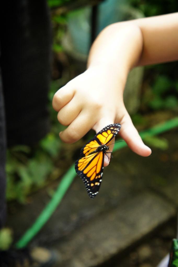 Tenir un papillon