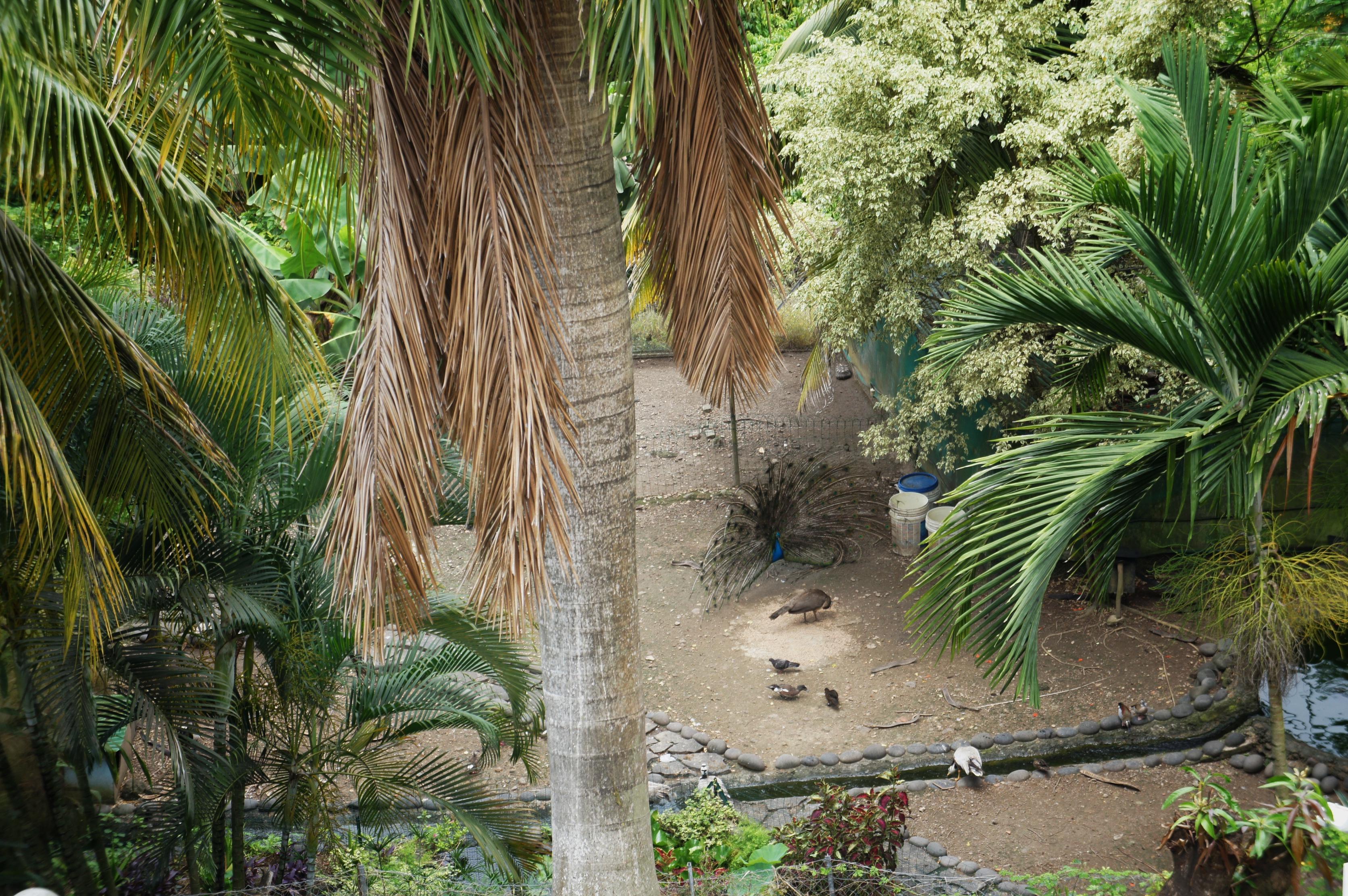 parc animalier de l'hotel