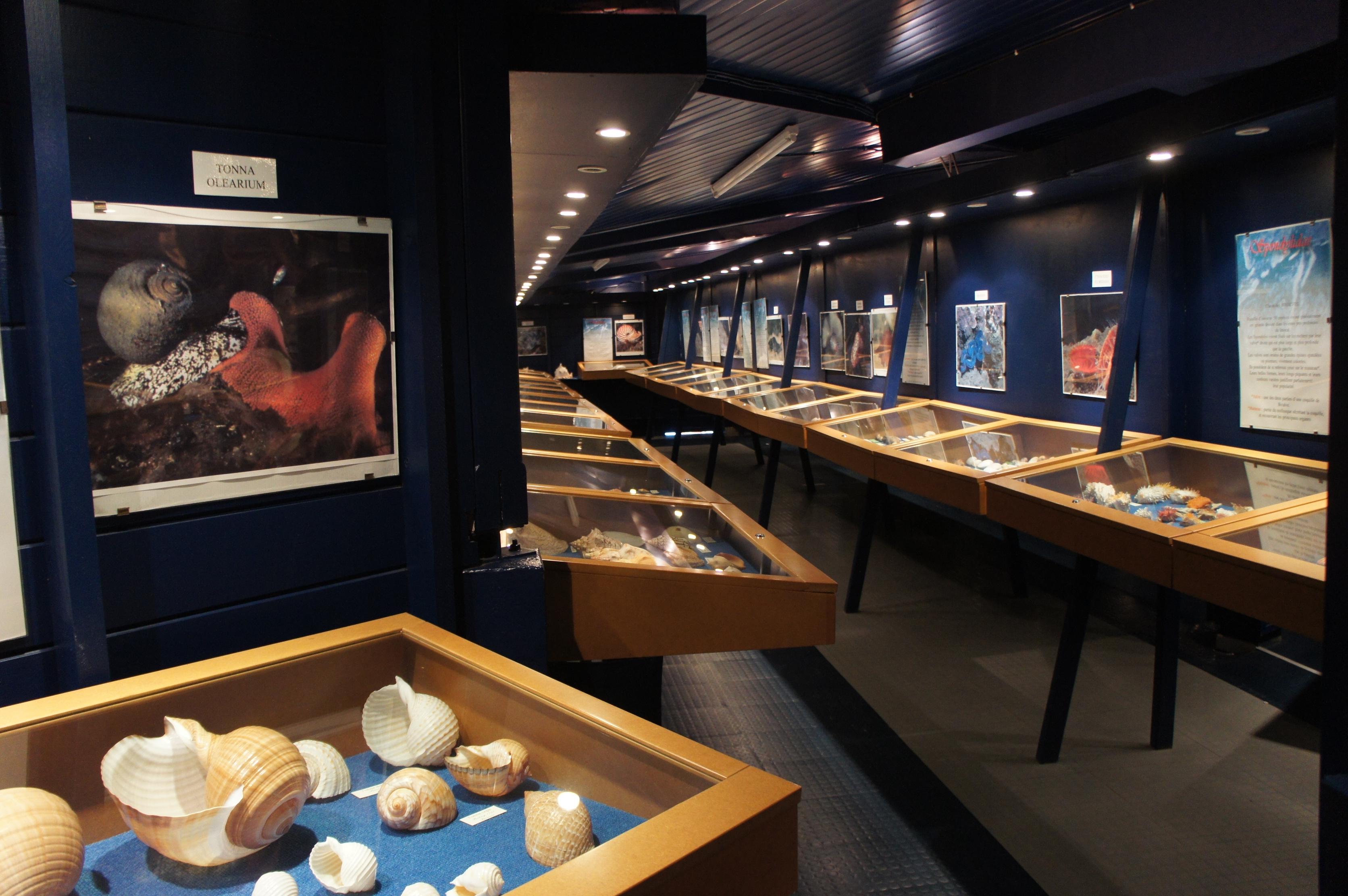 musée coquillage 1