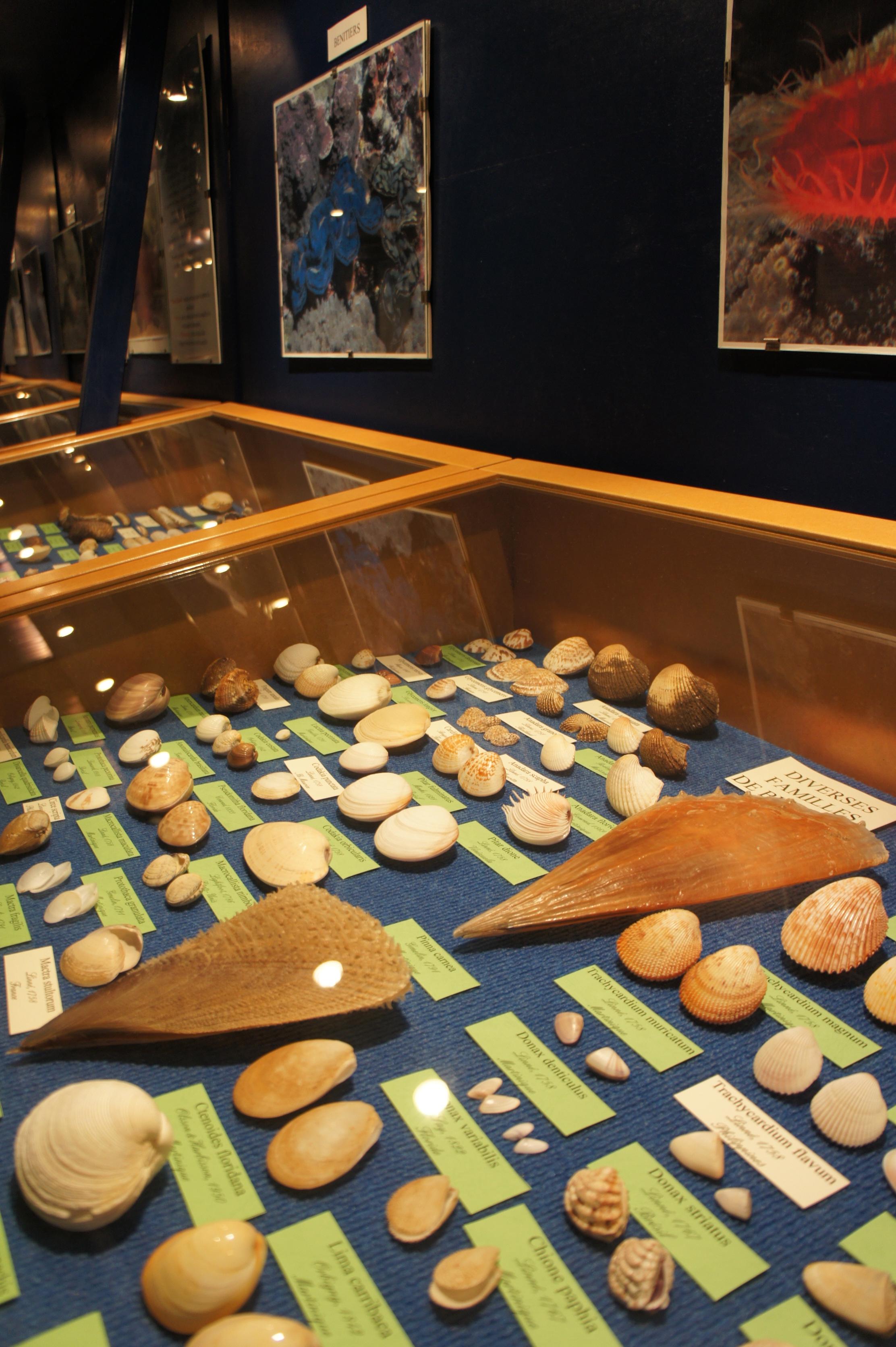 musée coquillage3
