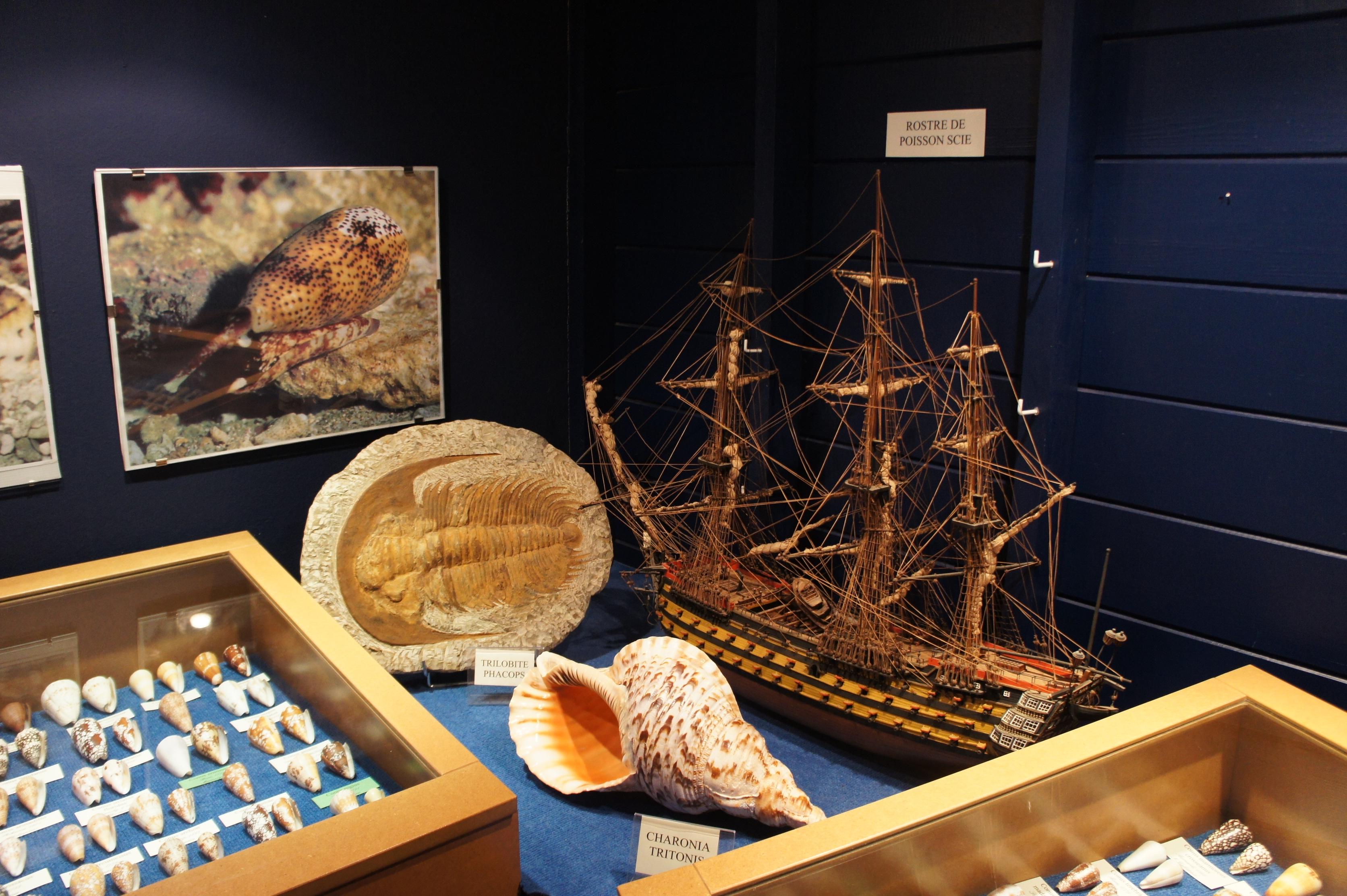 musée coquillage 8