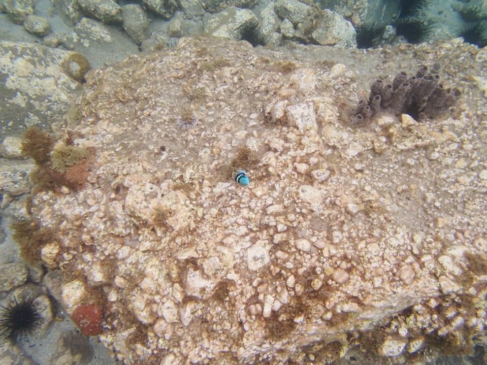 sous l'eau 5 - anse dufour
