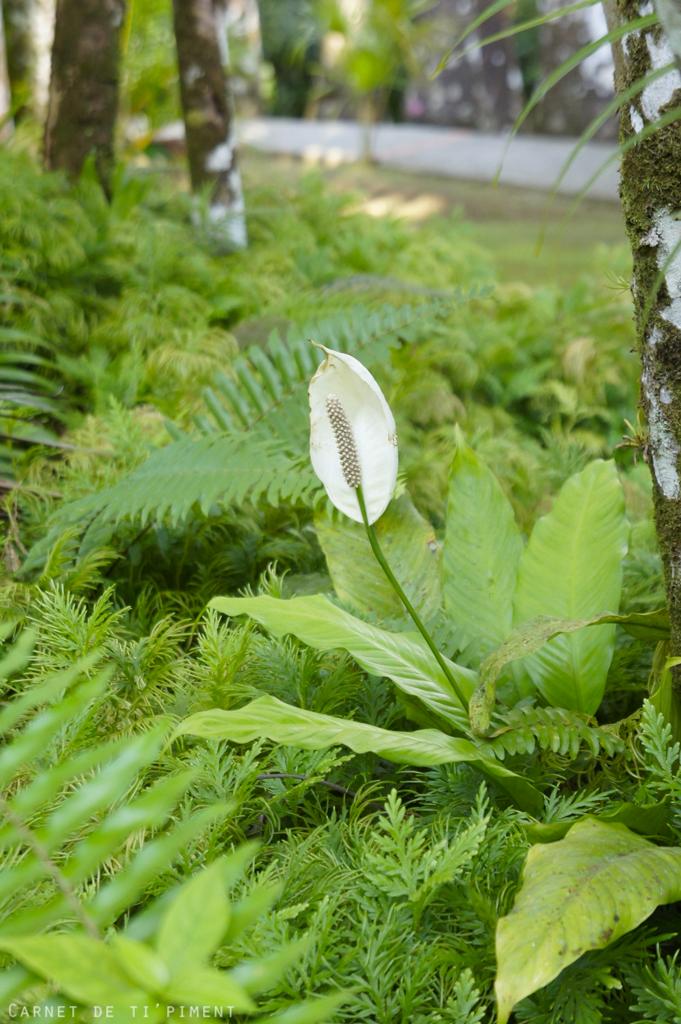 Jardin de Balata Martinique - mois de mai