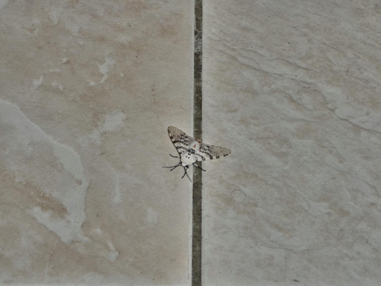 papillons (1)_Fotor