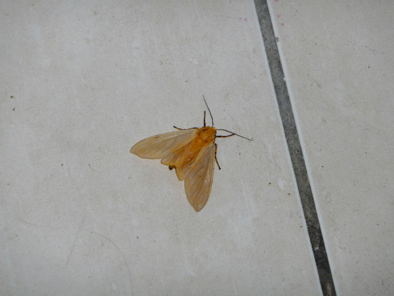 papillons (5)_Fotor