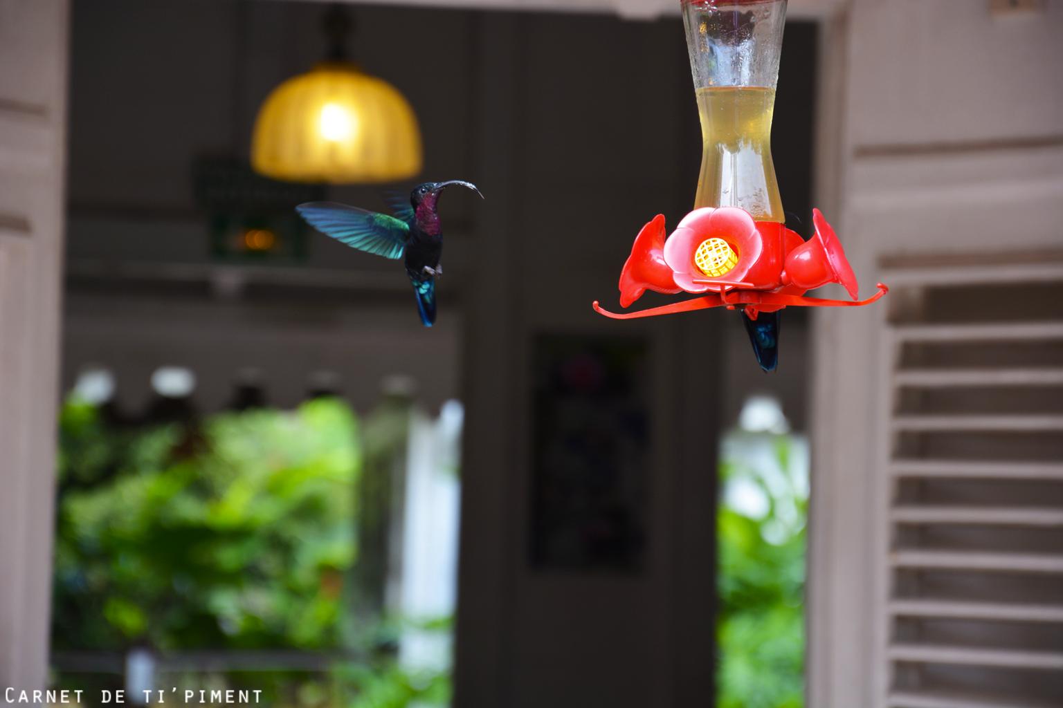 balata-colibri-1