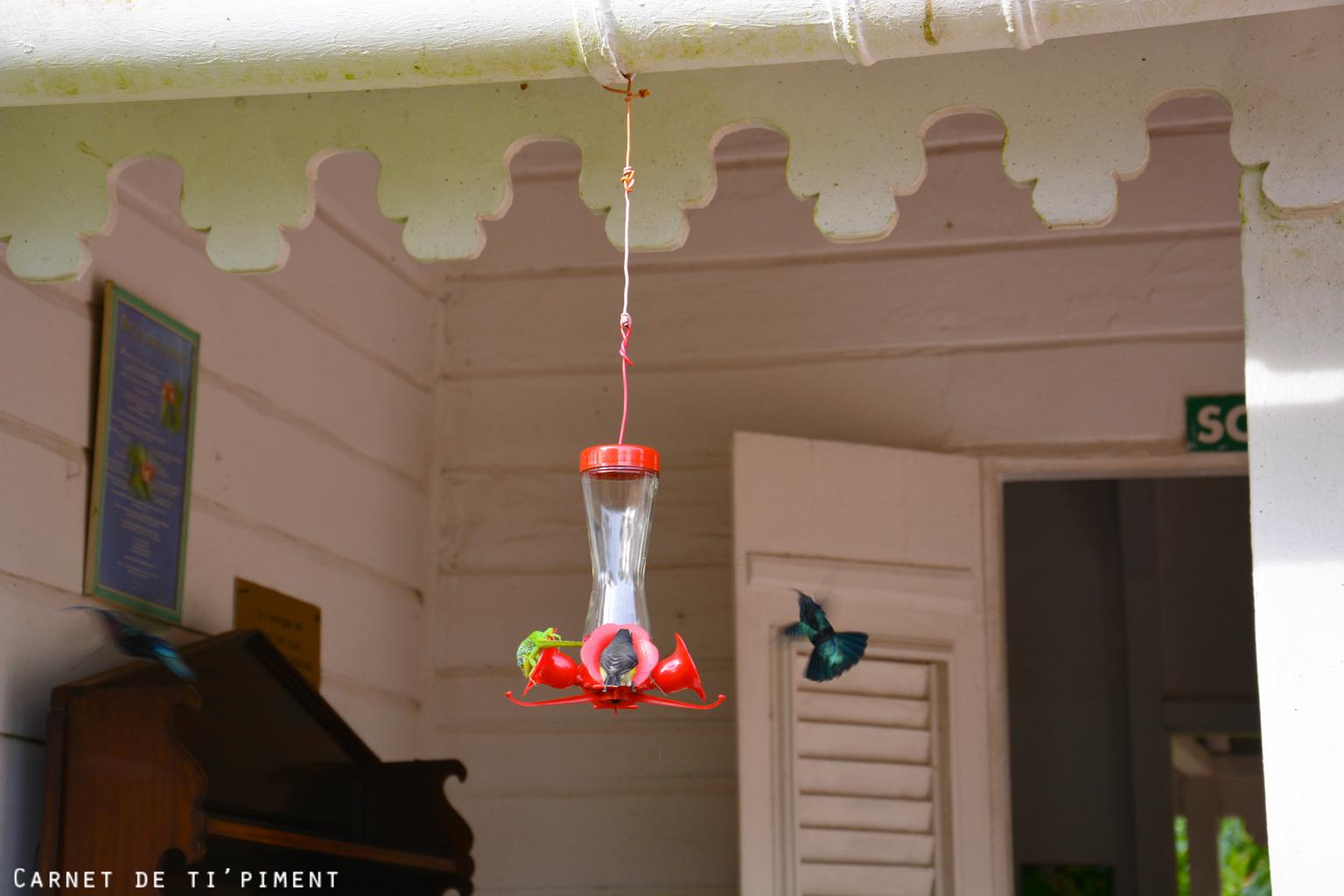 balata-colibri-2