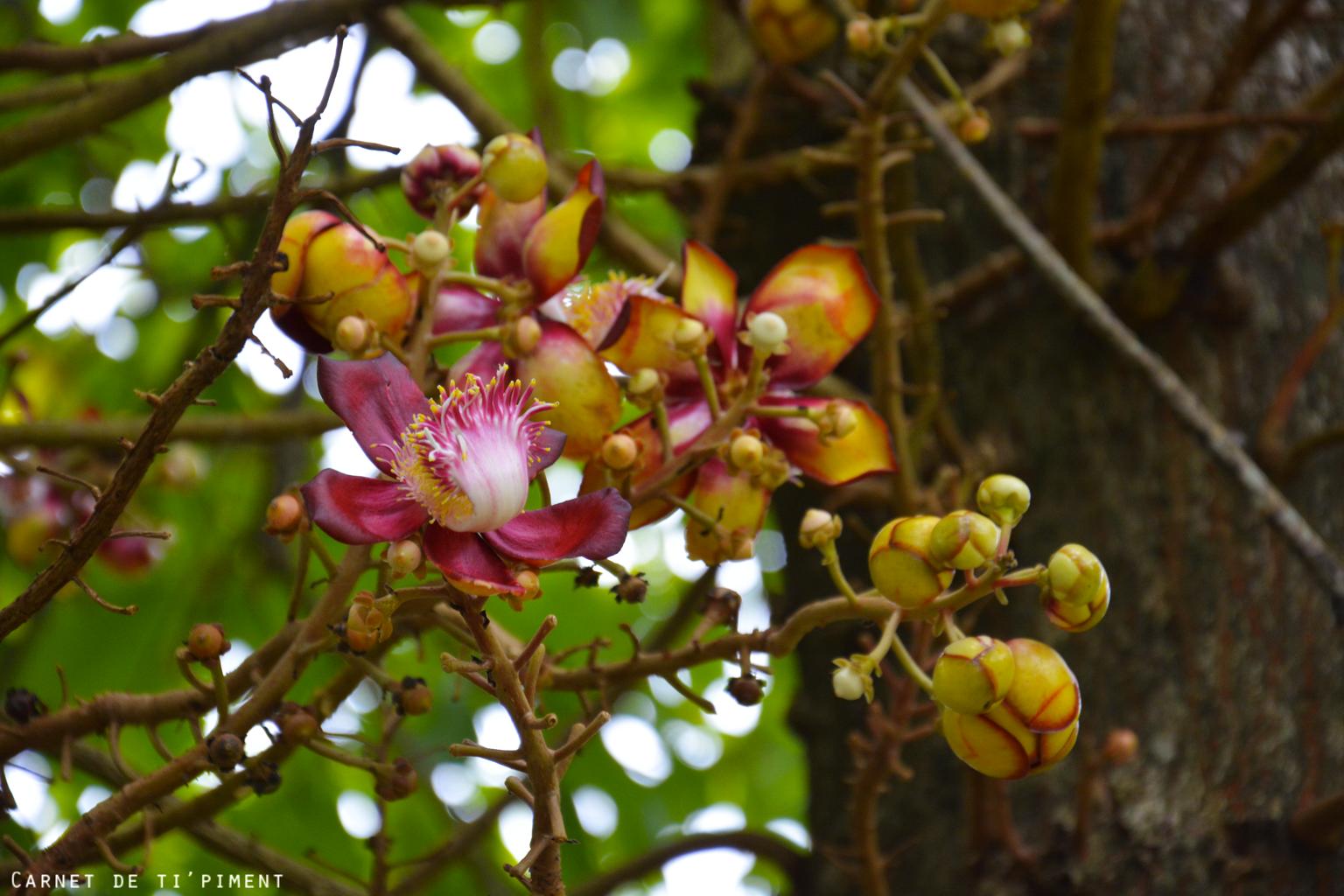 clément-fleur