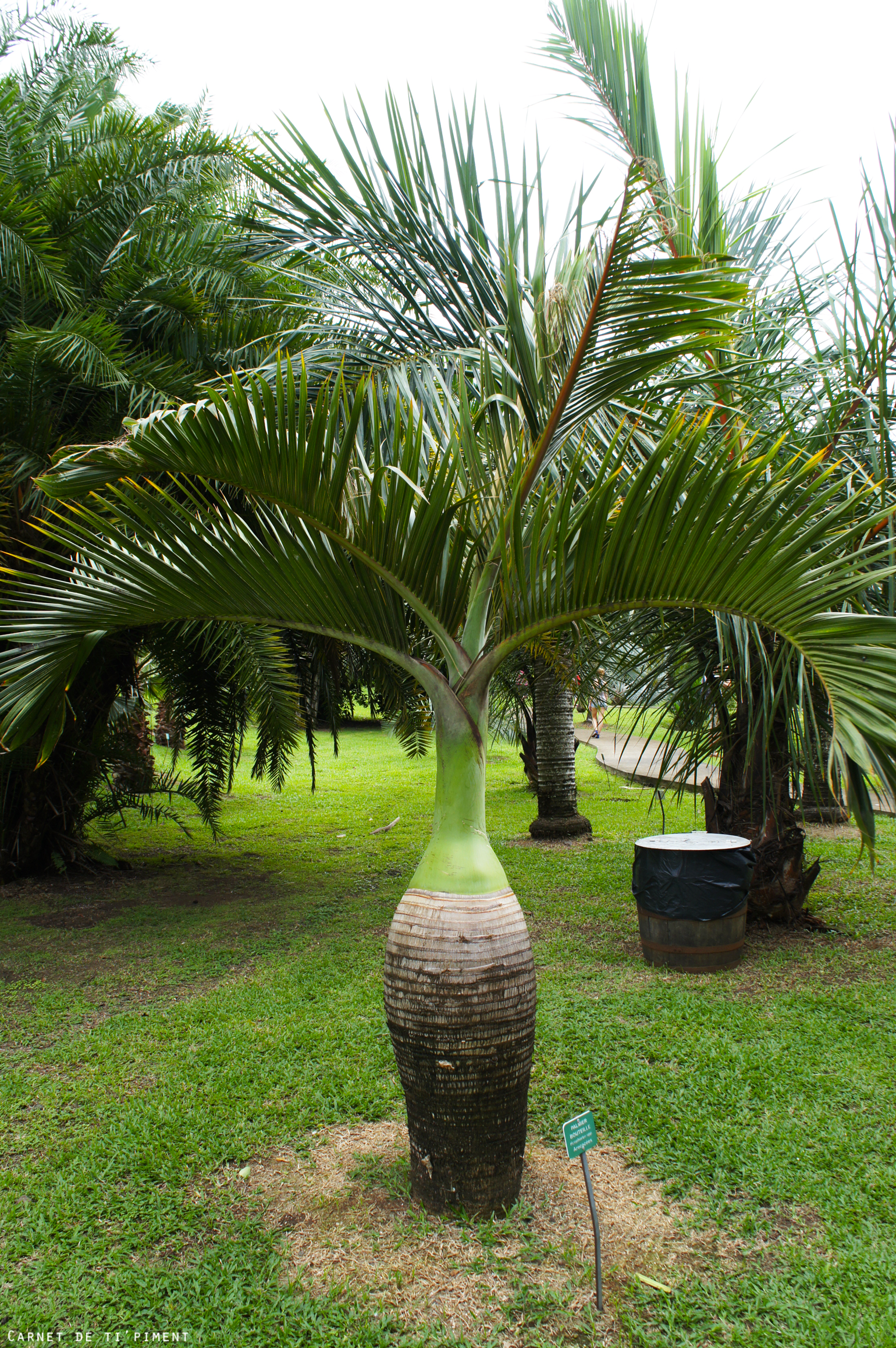 clément-palmier-bouteille
