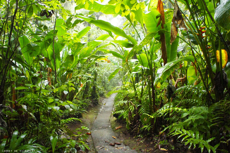 emeraude-dans-la-forêt