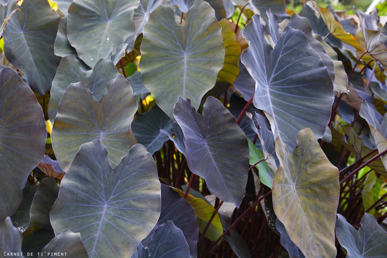 emeraude-plante
