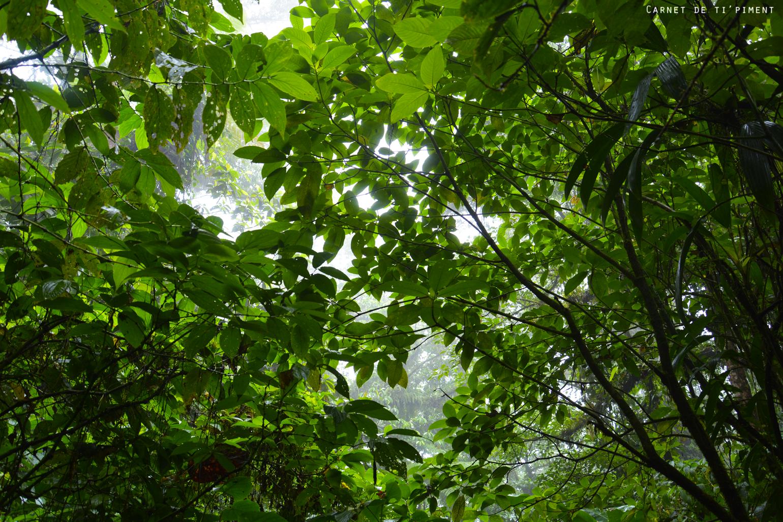 emeraude-sous-la-végétation