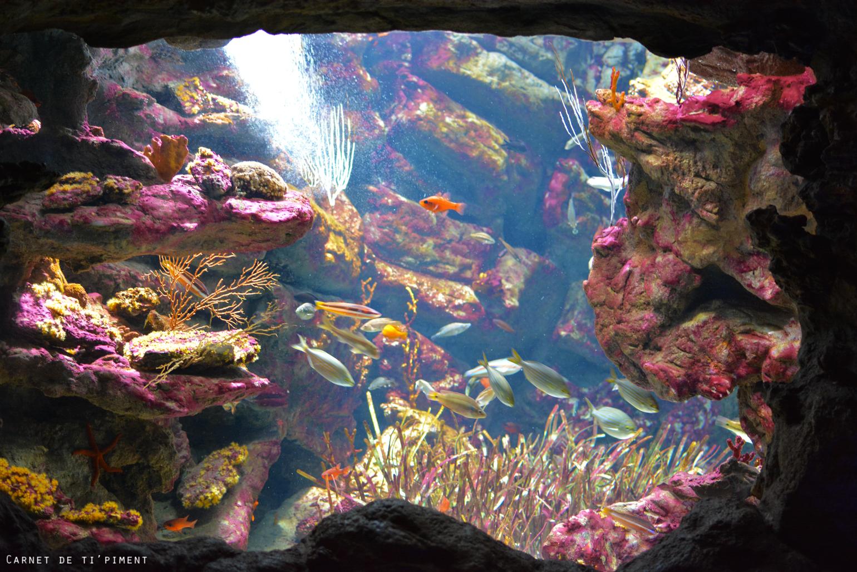 retour-vac-aquarium-2