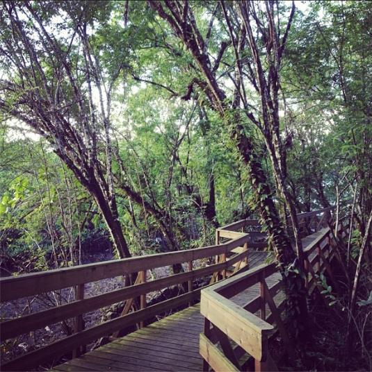 Vendredi : Randonnée à la forêt de Vatable aux Trois Îlets