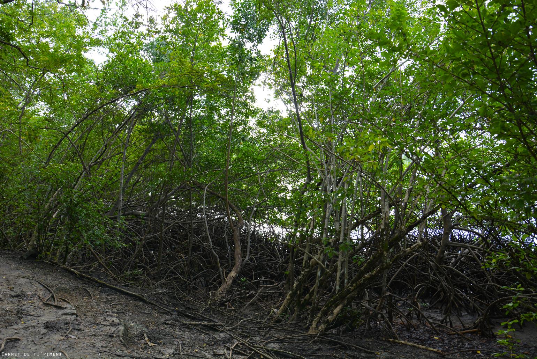 vue-vatable-mangrove