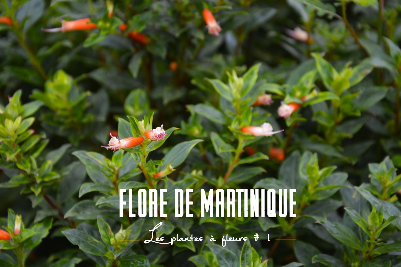 plantes tropicales fleuries 1 flore de martinique la tchipie. Black Bedroom Furniture Sets. Home Design Ideas